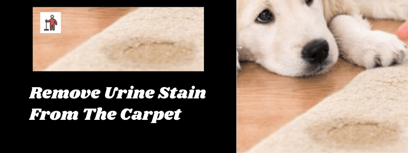 Remove Urine Stain From The Carpet