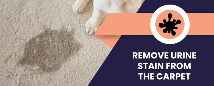 How To Remove Urine Stain From The Carpet?